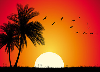 Tropical Sunset With Palms