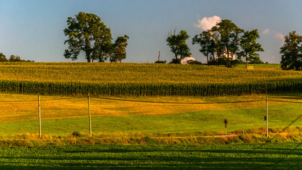 Farm fields along a country road in York County, Pennsylvania.