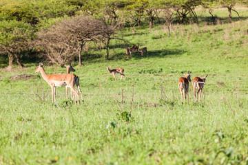 Buck Landscape Wildlife