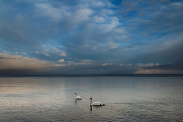 Sea and swans..