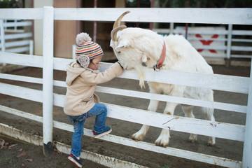 山羊と遊ぶ少女