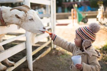山羊にエサを与える子供