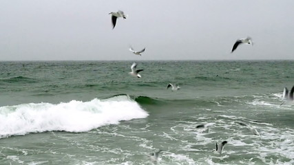 Seagulls Flying Over the Sea in Strong Wind