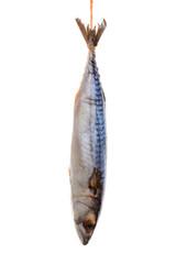 Fresh mackerel isolated on white background.