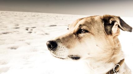 dog (223)