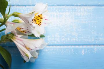 White alstroemeria flowers