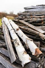 Birke Holz Brennholz Lager