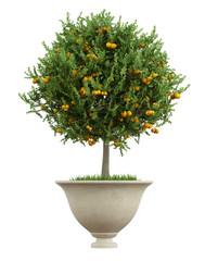 Classic vase with snall orange tree  - 3D Rendering