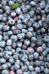 Blueberries Closeup
