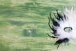 beautiful mask of feathers on green blackboard