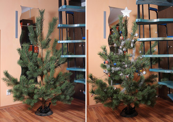 Christmas  tree   without and with christmas decorations
