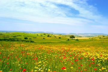 Panorama con prato fiorito - papaveri e margherite gialle