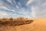 Naklejka Yellow desert
