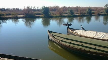 Cormoranes sobre barca