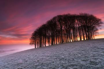 Fiery Sunrise over Misty Woods