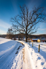 Tree along a snow-covered road in Seven Valleys, Pennsylvania.