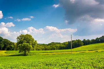 Tree in a farm field in rural York County, Pennsylvania.