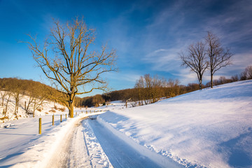 Trees along a snow-covered road in Seven Valleys, Pennsylvania.