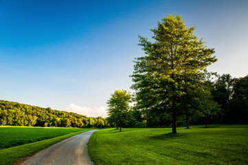 Trees and lawn along dirt path in Southern York County, Pennsylv