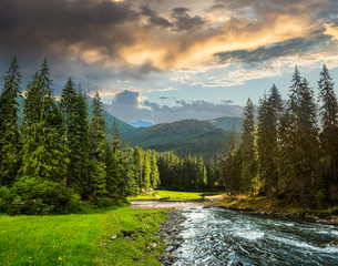 Mountain river in pine forest © Pellinni