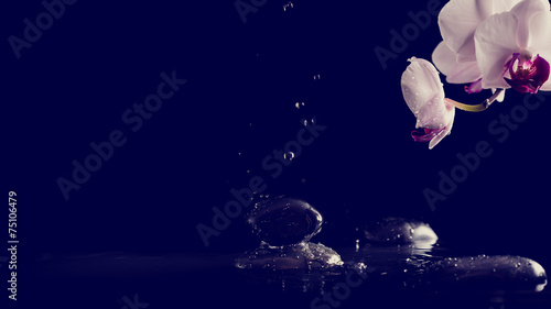 Foto op Plexiglas Orchidee Spa background with pink orchids and fresh water splashing on bl