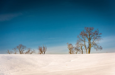 Trees on a snow covered hill in Seven Valleys, Pennsylvania.