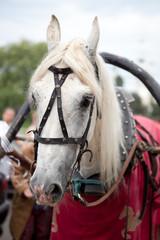 Белая лошадь в упряжке