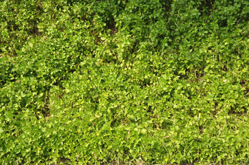 natural plants texture
