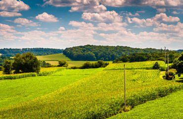 View of corn fields and rolling hills in rural York County, Penn