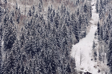 Chamonix - Mont - Blanc. Path up the Mountain with winter forest