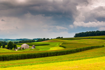 View of corn fields on a farm, in rural York County, Pennsylvani