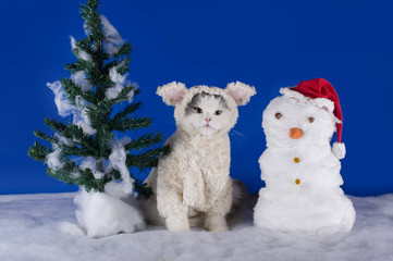 cat dressed as a sheep - a symbol of 2015
