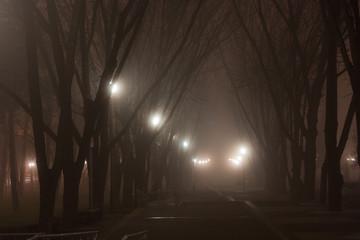 walk in the misty park