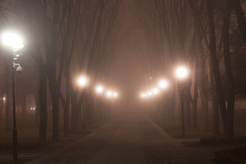 walk in the misty park