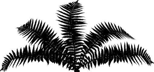 fern bush black silhouette isolated on white