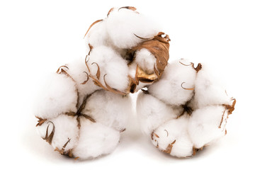 Baumwolle