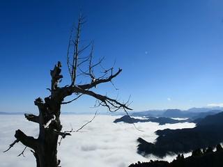 sis bulutlarına ağaç tepesinden bakmak