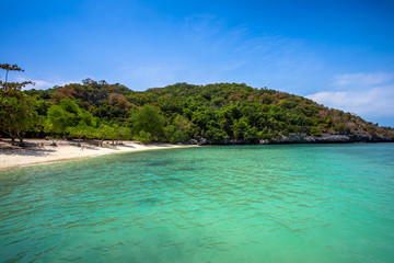 Tropical white sand beach with trees.