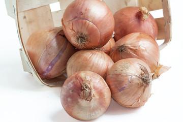 Oignons rosés de Roscoff - Allium cepa - sur fond blanc
