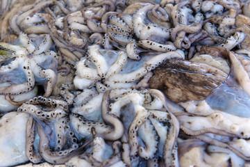 fresh octopus on the ice