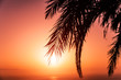 Palm tree silhouette against a sunset