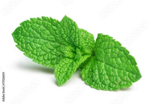 Fresh mint - 75126634