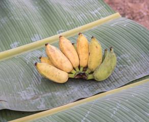 banana on banana leaf tree
