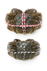 raw shanghai hairy crabs(male and female) ,dorsal side