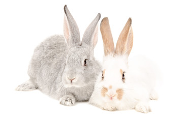 Two rabbits sitting together