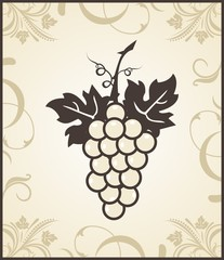 retro engraving of grapevine