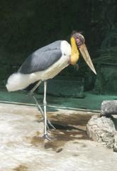 Птицы тропиков