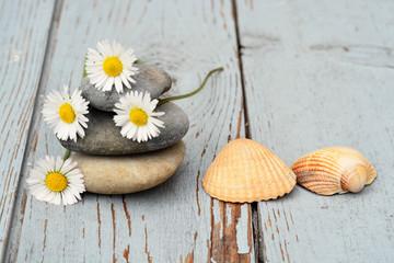 Drie zenstenen met madeliefjes en schelpen op oud hout