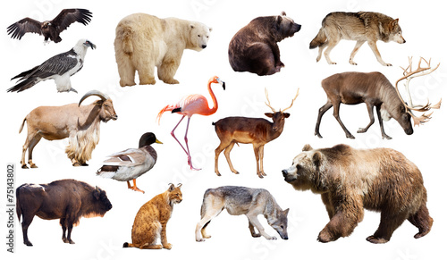Fotobehang Lynx bear and other european animals. Isolated on white