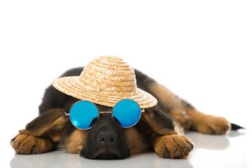 Schlafender Welpe mit Sonnenbrille und Hut